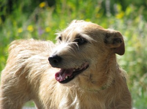 Kifli kutya ezen a képen már 11 esztendős. Gondoltátok volna?