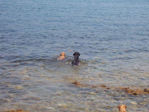 Úszóverseny a botért